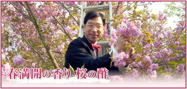 春満開の香り 桜の酢